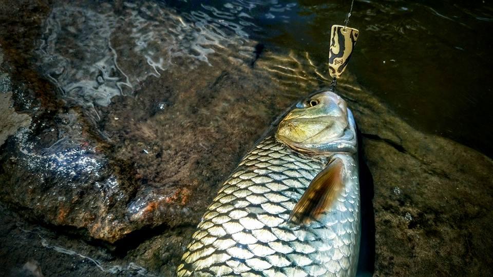 Рыбалка на голавля блесна Iris SV Fishing Lures серии Frog