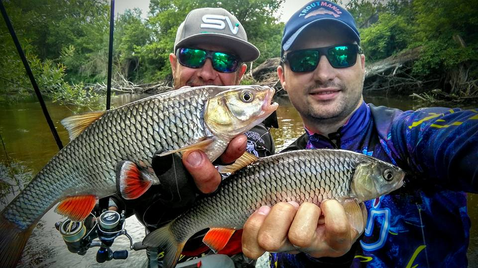 Double chubs on SV Fishing Lures