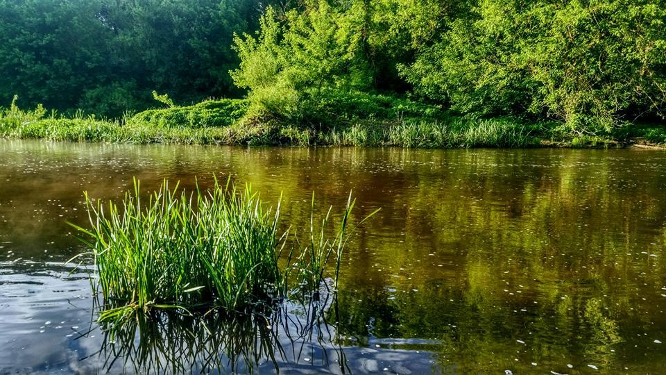Ловля голавля на реке Тетерев на блесны SV Fishing Lures